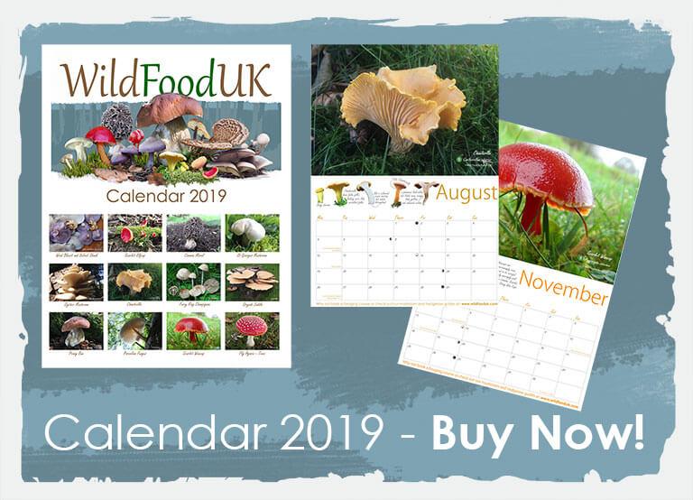 Buy our 2019 Calendar