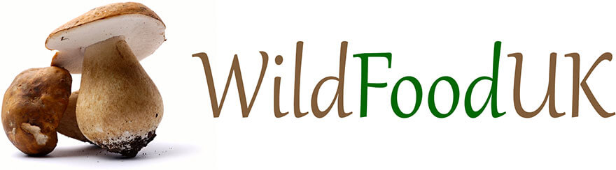 Wild Food UK