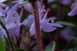 Flower Stem