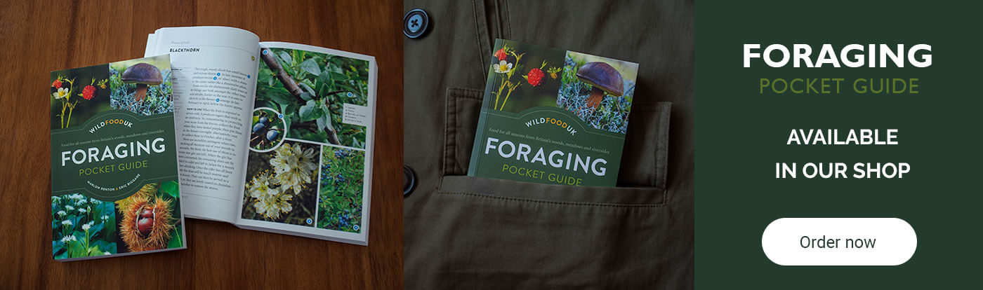 Foraging guide