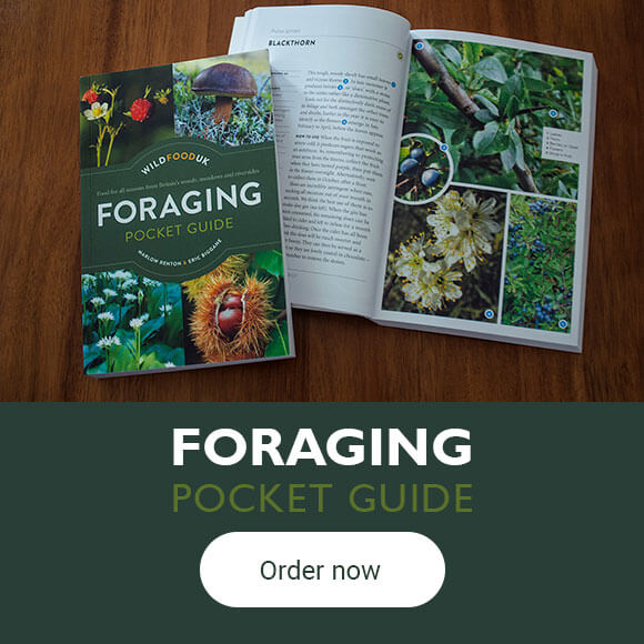 Foraging Pocket Guide