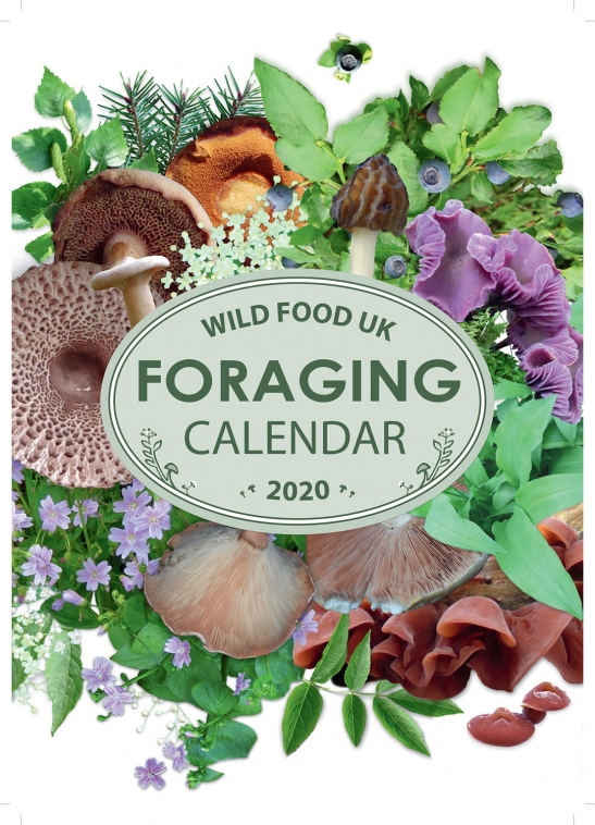 Wild Food Foraging Calendar 2020