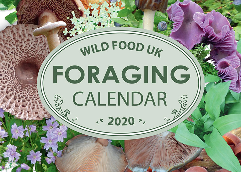 Wild Food Foraging Calenda2